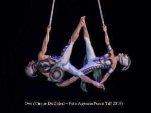 Cirque Du Soleil (OVO - Argentina - Foto Agencia Punto Tiff A003)